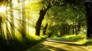 drzewa-przebijajace-wiatlo-droga